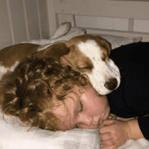 Hull's ozark beagles
